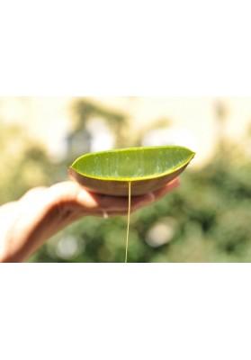 Naturalsophy Ulei Organic Wonder, 50ml